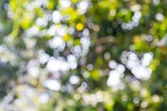 Lumières abstraites Defocused Photos libres de droits