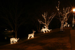 Lumières de cerfs communs de Noël   photo libre de droits