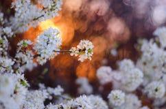 Lumières de coucher du soleil Photo libre de droits