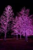 Lumières de décoration sur des arbres la nuit Image libre de droits