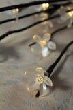 Lumières de fleur blanche Photo stock