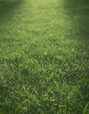 Lumières de jour de fin tombant au-dessus de l'herbe verte Photo stock