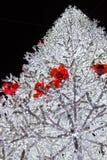 Lumières de Noël dans Salerno photos stock