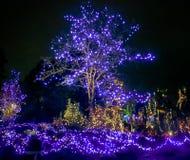 Lumières de Noël extérieures Photo stock