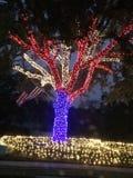 Lumières de Noël patriotiques image libre de droits