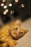 Lumières de Noël rêveuses de chat Photographie stock libre de droits