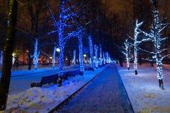 Lumières de Noël sur des arbres en parc Photo stock