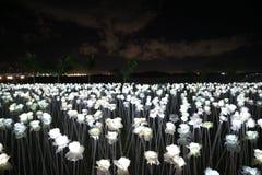 10000 lumières de nuit de roses Images libres de droits