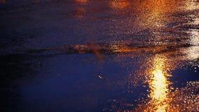 Lumières des voitures et passage piéton sur le macadam humide banque de vidéos