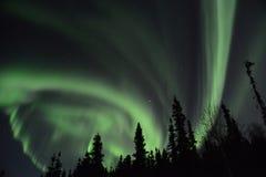 Lumières du nord dans les arbres Photo libre de droits