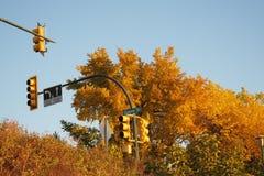 Lumières il arbres photos libres de droits