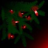 Lumières rouges dans les branches vertes de pin Photographie stock libre de droits