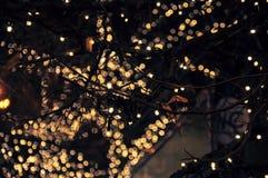 Lumières sur l'arbre photographie stock libre de droits