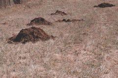 Lumi?re du jour l'engrais se trouve sur le champ engrais sans additifs chimiques Tout normal photo stock