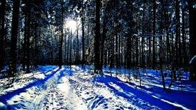 Lumia 640xl & x28 della foresta di inverno di Sibirian; mobile& x29; Fotografie Stock