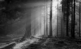 Lumineux brillant Image libre de droits