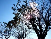 Lumineux et arbre photographie stock libre de droits