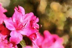 Lumineux et rose Photos stock