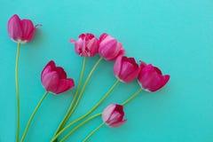 Lumineux frais de tulipes rouges de rose sur un fond de texture bleu de feu vert image stock