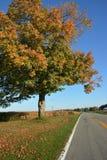 Luminosidade da estrada secundária Foto de Stock Royalty Free