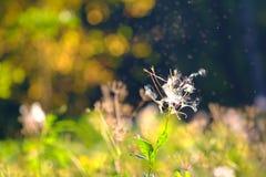 Luminosidade do fluff das plantas fotos de stock