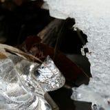 Luminosità di inverno Immagini Stock