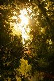 Luminoso bonito através das folhas das árvores fotos de stock royalty free