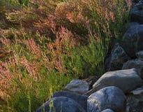Luminoso disparado da flor selvagem contra o fundo do borr?o fotografia de stock royalty free