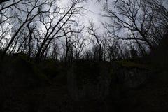 Luminoso forte em uma floresta do carvalho Fotos de Stock