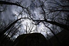 Luminoso forte em uma floresta do carvalho Foto de Stock