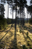 Luminoso na floresta Fotos de Stock