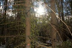 Luminoso, sole della molla che splende attraverso i rami degli alberi in una foresta difficile fotografia stock