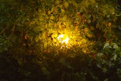 A luminous ball lamp in dense thickets of green shrubs in the dark. Luminous ball lamp in dense thickets of green shrubs in the dark royalty free stock photos