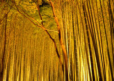 Luminous bamboo woods in Kyoto Japan Royalty Free Stock Images