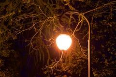 Luminous street light in foliage at night Stock Images
