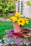 Luminous yellow daisies Stock Image