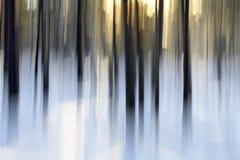 Lumière de l'hiver Images libres de droits