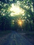 Lumière du soleil dense de chemin forestier Photo stock