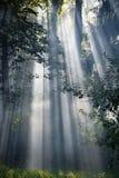 Lumière du soleil lumineuse Photo libre de droits