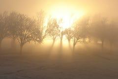 Lumière magique d'hiver Images libres de droits