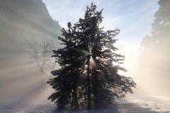 Lumière par l'arbre Images libres de droits