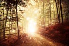 Lumière rêveuse de forêt avec des lumières de luciole Photos libres de droits