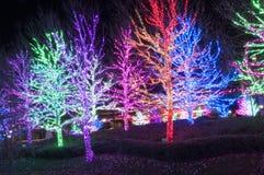 Lumières d'arbre de Noël Image stock