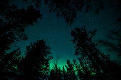 Lumières du nord dans la forêt de la Suède Image stock