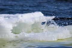 Lump of ice floats and melts along the river Stock Photography