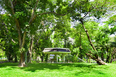 Lumphini park.Bangkok.Thailand Royalty Free Stock Photo