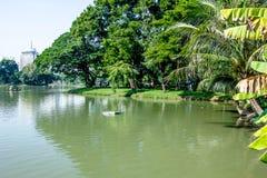 Lumpine park. Pond, in the Lumpine park , Bangkok Royalty Free Stock Photos