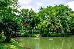 Lumpine park. Pond, in the Lumpine park , Bangkok Royalty Free Stock Photography