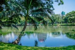 Lumpine park ,. Pond, in the Lumpine park , Bangkok Stock Photo