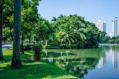 Lumpine park ,. Swimming Lumpini Park in Bangkok Royalty Free Stock Photos